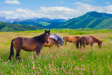 Horse Health Hotline for Holistic Horse Health Issues