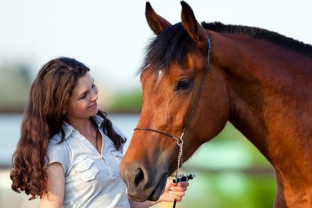 Consultations about Holistic Horse Care