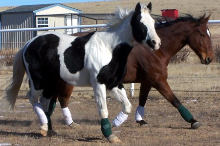 Online Course about Holistic Horse Care