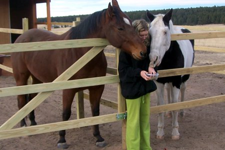 Articles about Holistic Horse Care