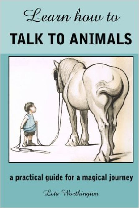 Learn How to Talk to Animals – A Practical Guide for a Magical Journey
